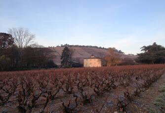 Vignoble du Chateau des Moriers