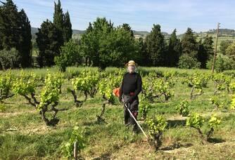 entretien des vignes au domaine de Crémone