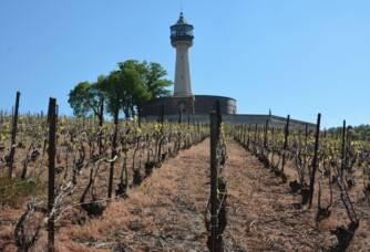 Vignoble Champagne Quenardel & Fils