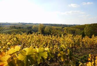 Vignoble du Domaine Ogereau