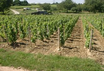 Vignoble du Clos de l'Epinay