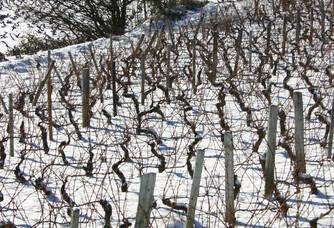 Vignes enneigées du Château d'Emeringes
