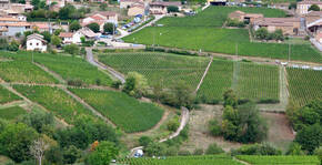 Vendanges au Domaine Thierry Drouin