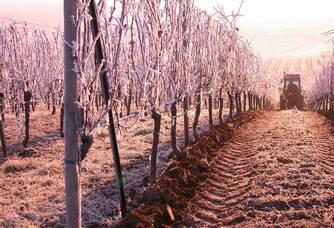 Les vignes du vignoble des 2 lunes