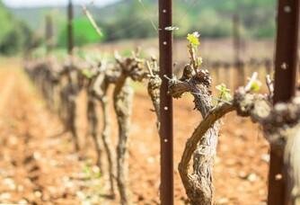 Le Vignoble du Clos Gautier