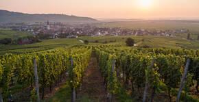 Lever de soleil sur la plaine d'Alsace