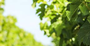 Les Vignobles Bardet(Bordeaux) : Visite & Dégustation Vin