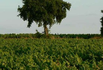 Le vignoble du Domaine du Champ Chapron