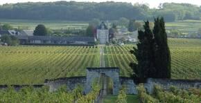 Les vignes du Château de Chaintres