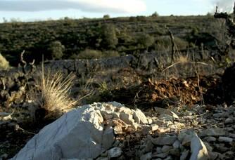 Le terroir du Domaine Padié