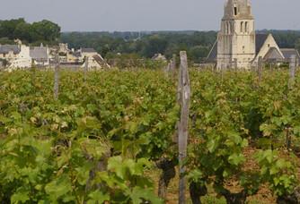 Les vignes du Domaine JDelmare