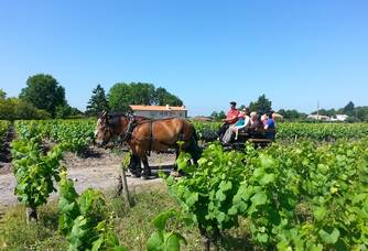 Balade en calèche dans le vignoble du Jardin d'Edouard