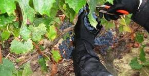 Le Jardin d'Edouard(Loire) : Visite & Dégustation Vin