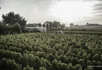 Le vignoble du Château La Croix-Davids