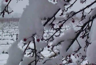 L'hiver sur le domaine la Bastide