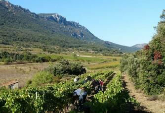 Le vignoble du Domaine Les Vingt Citadelles