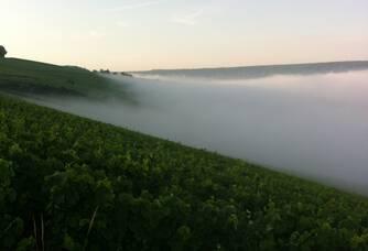 Le vignoble du Champagne Serveaux Fils
