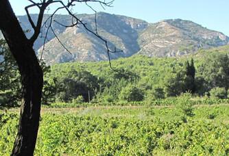 Vue sur les vignes du Domaine Milan