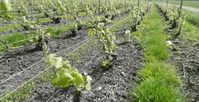 Champagne Velut(Champagne) : Visite & Dégustation Vin