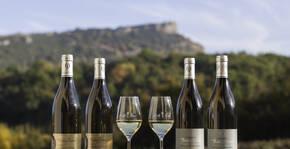 Domaine Thierry Drouin(Bourgogne) : Visite & Dégustation Vin