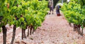 Château Grand Moulin (Languedoc) : Visite & Dégustation Vin