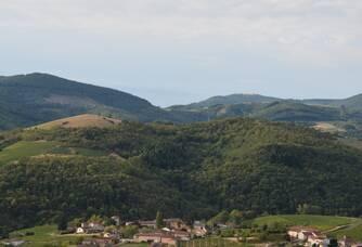 Vue des vignes Ducroux et Ducroux