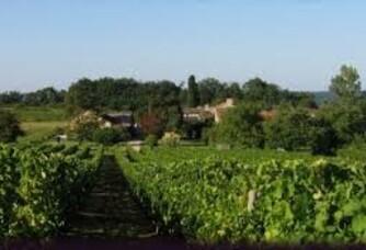 Les vignes du domaine Perreau
