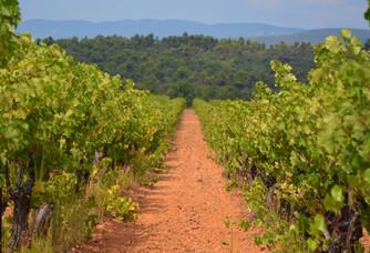 Les vignes du rosé Aix