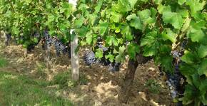L'entre deux mondes(Bordeaux) : Visite & Dégustation Vin