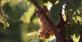 Domaine de la perdrix(Roussillon) : Visite & Dégustation Vin