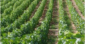 Domaine du Pont de Livier(Loire) : Visite & Dégustation Vin
