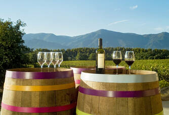 La vue sur les vignes et les Albères