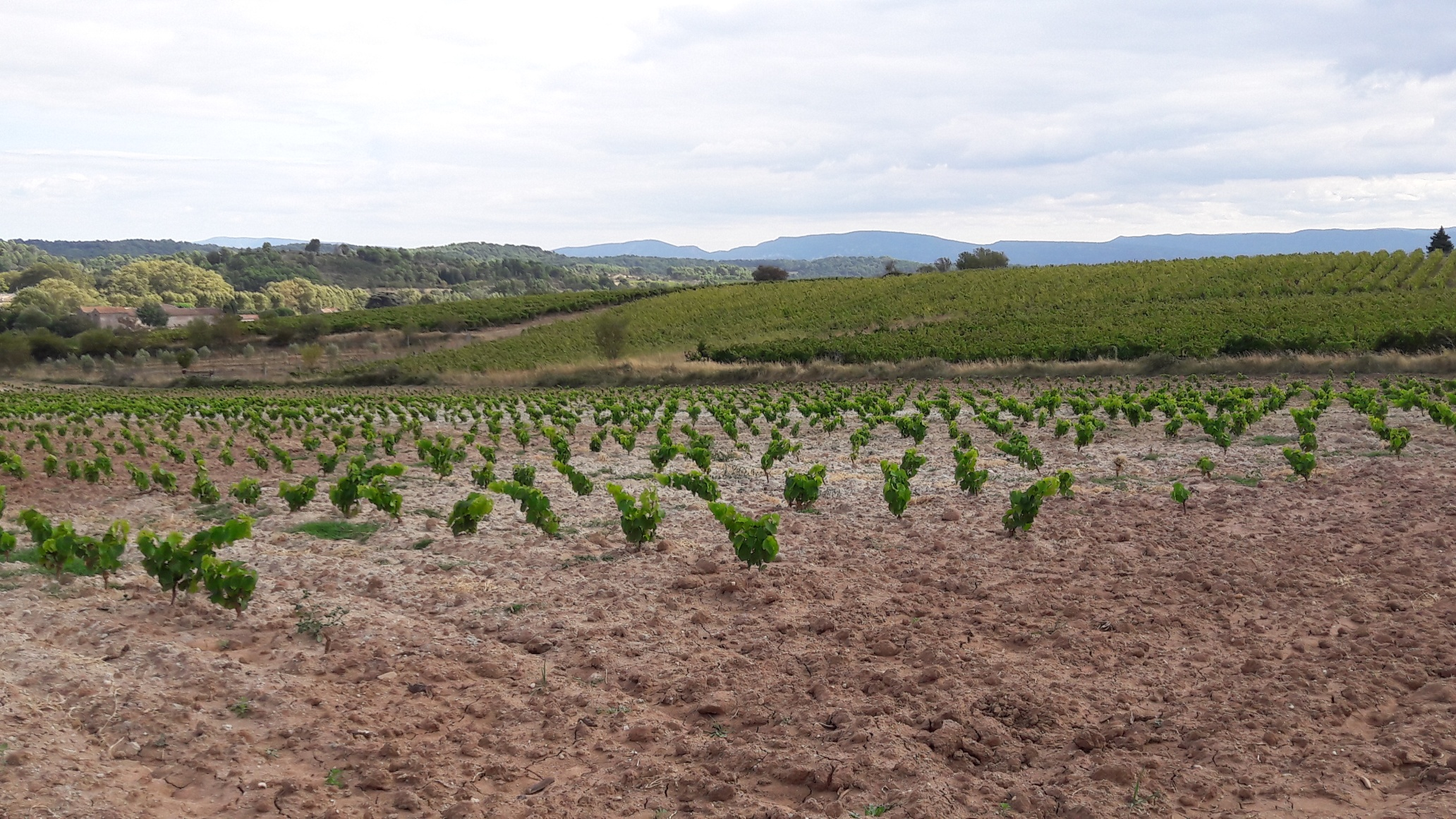 Domaine Les Maillols (Languedoc) | Winegrower Les Grappes
