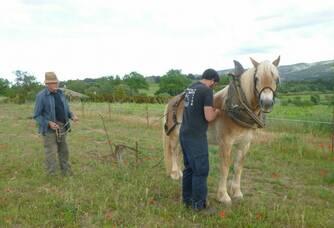 Voici Cyrius notre cheval qui apprend à travailler les sols