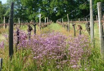 Vignes & biodiversité