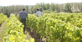 deux vignerons dans les vignes