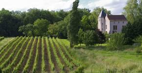Ampelidae - Le vignoble et la maison