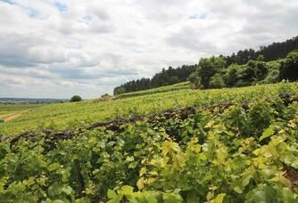 Domaine Trapet-Rochelandet - La vigne