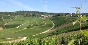 Le Vignoble d'Hautvillers