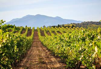 Clos Canereccia - Le vignoble