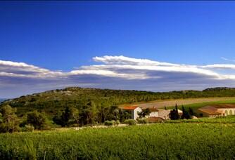 Château l'Hospitalet - Le vignoble