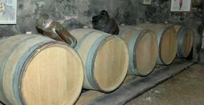 Domaine La Rizolière(Beaujolais) : Visite & Dégustation Vin