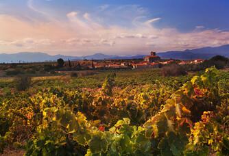 Dom Brial - Le vignoble