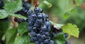 Domaine Guillaume Baduel(Bourgogne) : Visite & Dégustation Vin