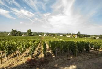 Vignobles Carles - La vigne