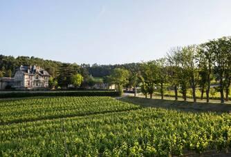 Domaine de Baronarques - La vigne et le château