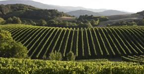 Domaine de Baronarques - Le vignoble