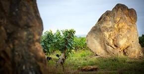 Châteaux Montus et Bouscassé(Sud-Ouest) : Visite & Dégustation Vin