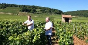 Domaine Jean-Marc Naudin - Dans les vignes