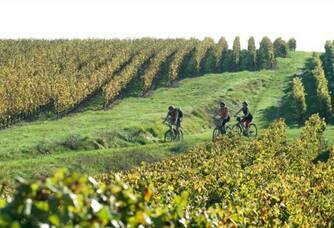 Château de la Greffière - Les vignes